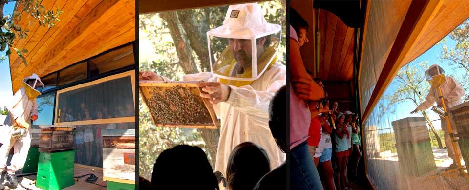 visite apiculteur