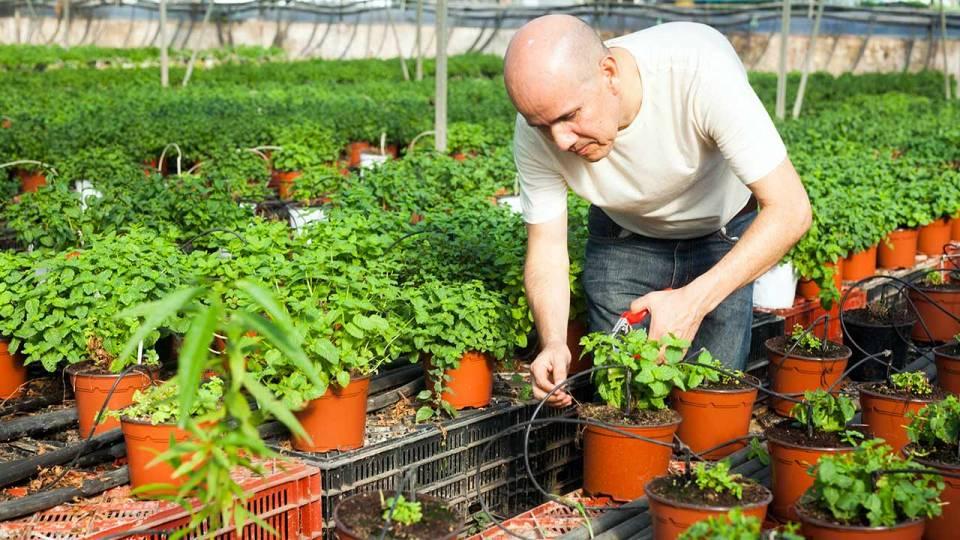 producteur plantes