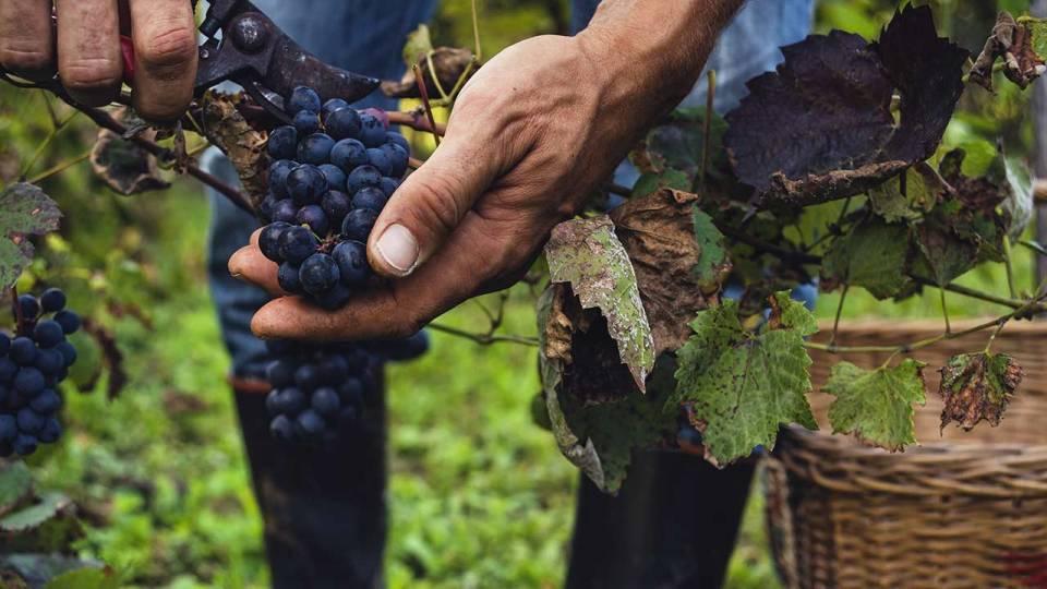 categorie_vignerons-viticulteurs
